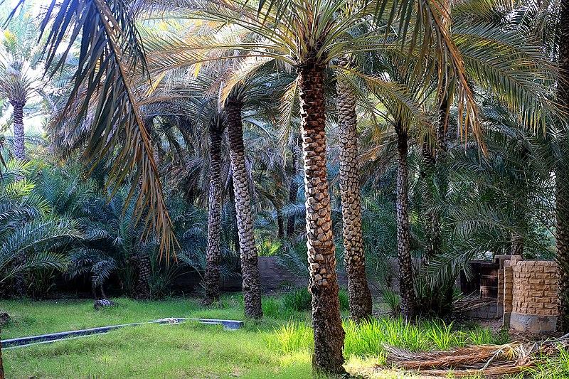 Beautiful heritage site in Al Ain