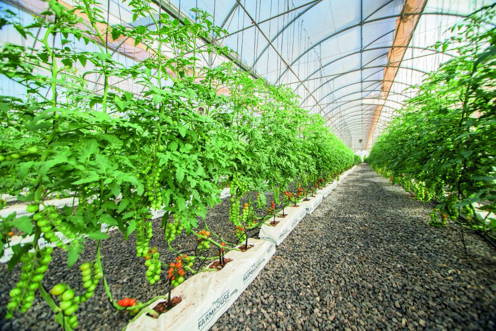 Green Farming to boost production in farms.