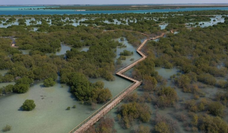 Mangrove Walk Is Now Open, Abu Dhabi's Stunning New Attraction