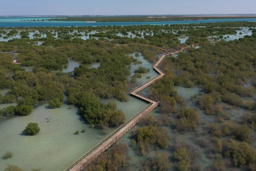 Abu Dhabi's Stunning Mangrove