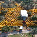 Giant Outdoor Maze