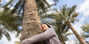 Hug a tree at Louvre Abu Dhabi
