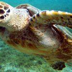 Turtles in Abu Dhabi