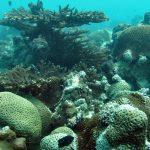 Coral Reefs in Abu Dhabi