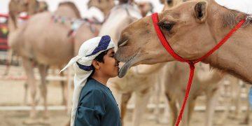 Al Dhafra Festiival