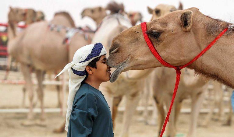 Abu Dhabi's Al Dhafra Festival expands preserving UAE's cultural heritage