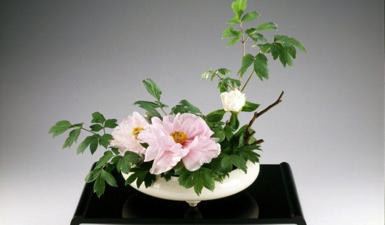 First Emirati certified Ikebana traditional Japanese flower art instructor