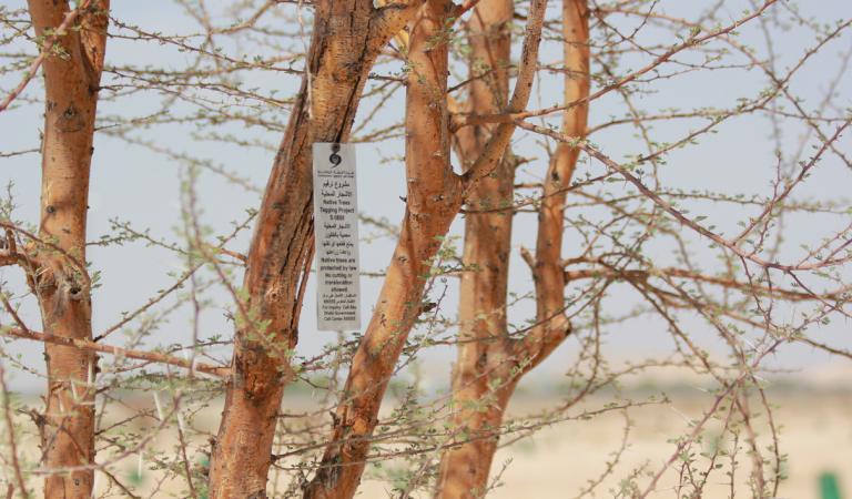 Environment Agency – Abu Dhabi begins to number endangered local trees
