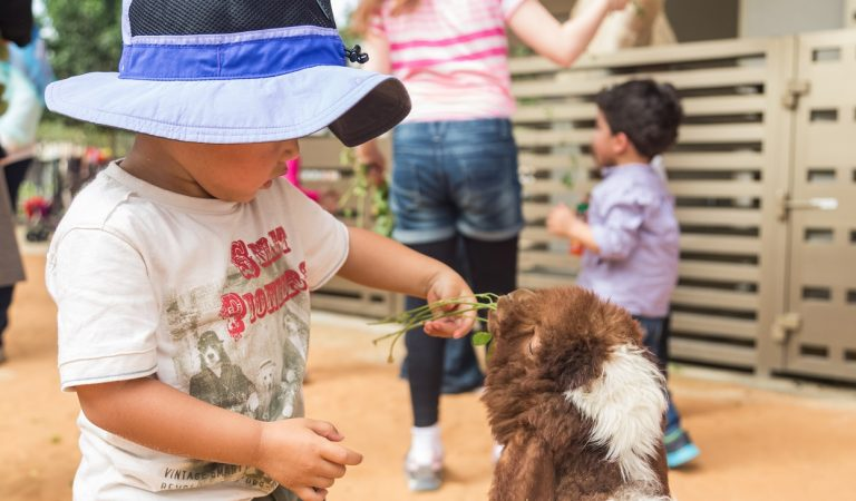 Let your little ones meet their new animal friends at Umm Al Emarat Park