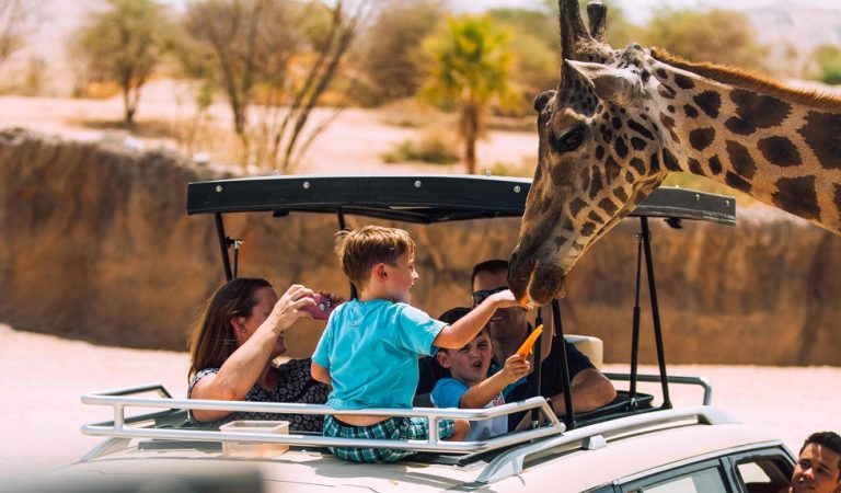 Spend a leisurely afternoon at Al Ain Zoo as the temperature falls