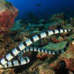 Sea Snakes in Abu Dhabi