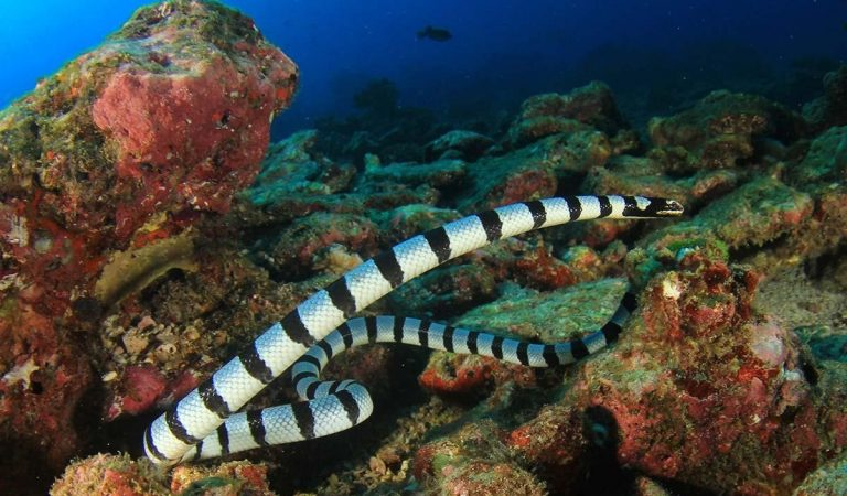 EAD issues sea snakes warning for beach-goers in the UAE